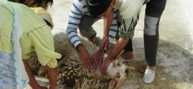 Aïd el Kebir, un risque sanitaire très élevé