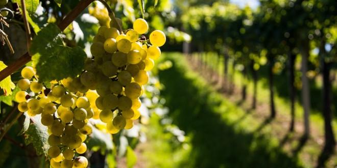 vins espagnols